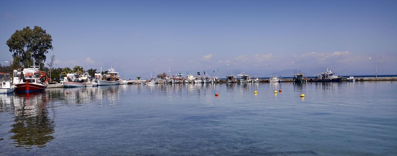 Petriti Harbour